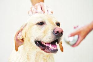 A dog having a massage
